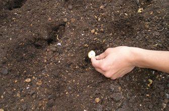 Как выбрать хороший посадочный материал овощей?